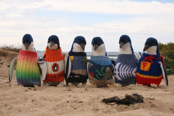 Australia's Oldest Man Knits Sweaters For Tiny Penguins Impacted By Oil Spills